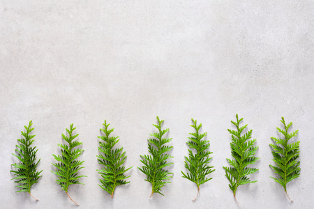 Christmas trees background, flat lay, top view