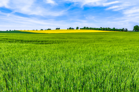 Green fields background. Horizon, sky and field or farm landscape at spring.