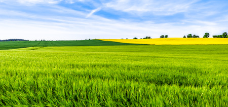 Green farm, panoramic view of farmland, crop of wheat on field, spring landscape 版權商用圖片