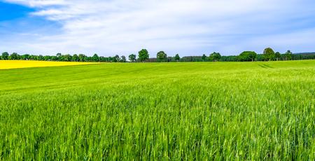 Grüner Bauernhof, Panoramablick auf Ackerland, Weizenernte auf dem Feld, Frühlingslandschaft
