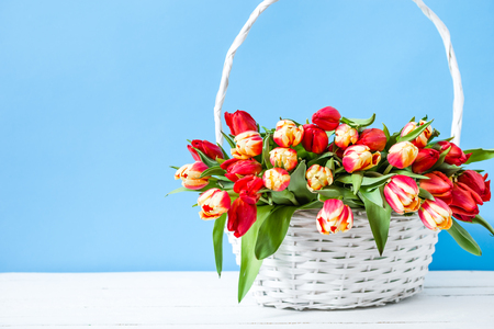 Basket with tulip bouquet. Spring easter flowers on blue background or mothers day gift. Zdjęcie Seryjne