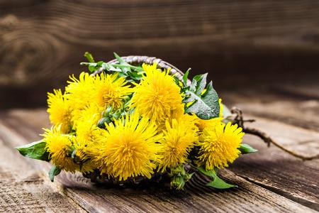 Fresh dandelion flowers, medicinal plant or herbs harvest Фото со стока