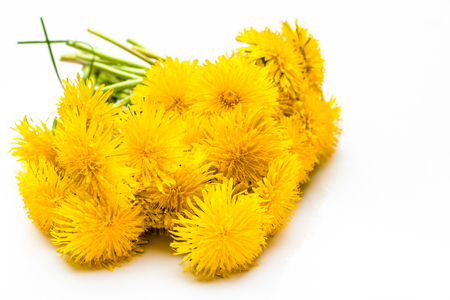 Bouquet of yellow dandelion flowers isolated on white background