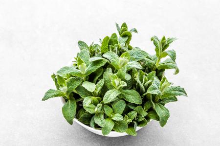 Green organic spearmint. Fresh mint leafs in bowl on grey background