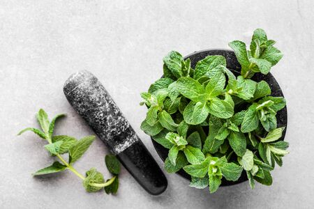 Green wild mint or peppermint, fresh mint leaves, top view