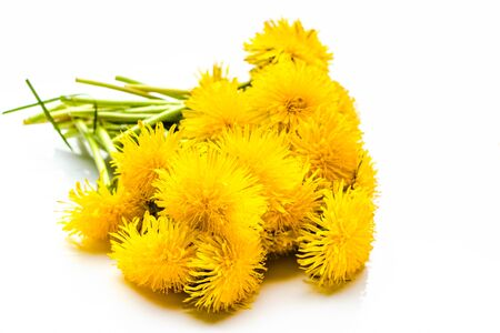 Bouquet of dandelion on white background Banco de Imagens - 124574530