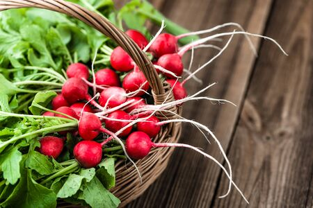 Farm fresh vegetables. Freshly harvested organic radishes, red bunch of radish on farmer market.