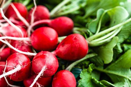 Freshly harvested red radishes, background. Fresh organic radish bunch.