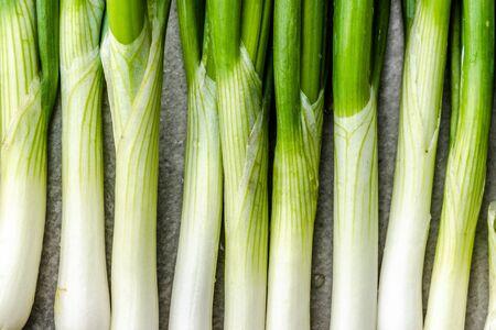 Green onion. Fresh organic vegetables freshly harvested from the garden.