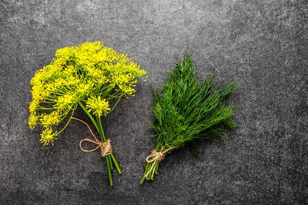 Culinary herbs. Green fresh dill bunch and flower of dill harvested freshly from the garden. Reklamní fotografie