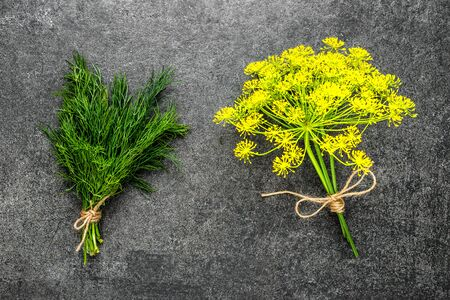 Freshly harvested herbs from the garden. Fresh dill herb and flower of dill plant on black background.