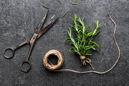 Freshly harvested herb of rosemary, fresh green herbs on black background Stockfoto