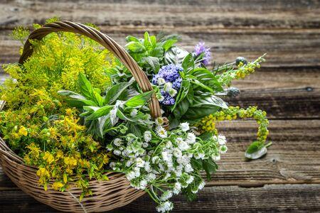 Assorted garden fresh herbs in the basket Banco de Imagens