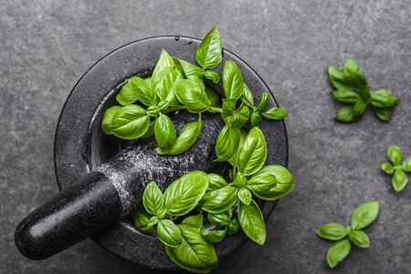 Fresh basil, green herb on dark background