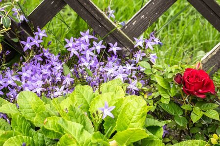 Summer flowers in the garden by the wooden fence, floral background