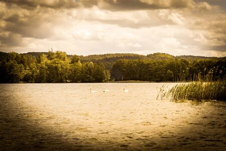 Vintage photo of beautiful lake with swans in the summer. Vacation and holiday time, nature composition, background or postcard, vintage effect and vignette. Banque d'images - 135332812