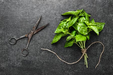 Freshly harvested herb of green basil, fresh garden herbs on dark background