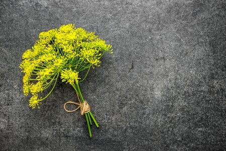 Fresh yellow dill flower on dark background