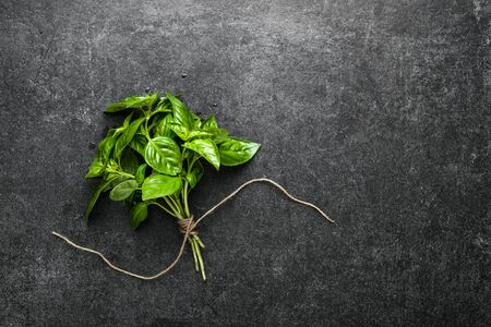 Freshly harvested herb of fresh basil, green herbs from the garden Banco de Imagens