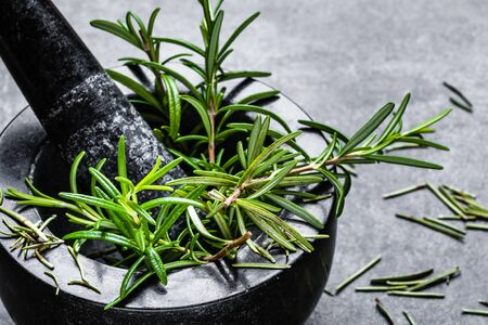 Fresh rosemary plant in mortar. Rosemary green herb from the garden. Banco de Imagens