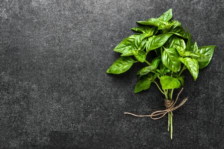 Bunch of basil with fresh green basil leaves on dark background