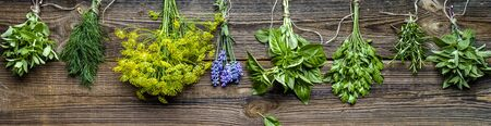 Bunches of herbs, fresh garden herb, long background