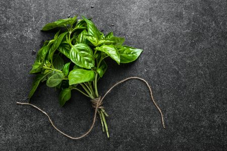 Bunch of fresh basil leaves. Green basil plant on black background.