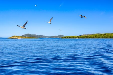 Seagull flying over Sea in Croatia, scenic view during the cruise in the Adriatic Sea. Vacation and travel concept.