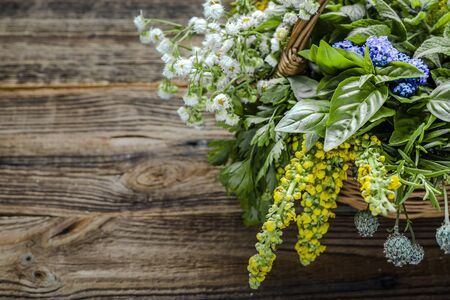 Collection of herb, fresh garden herbs on wooden background.
