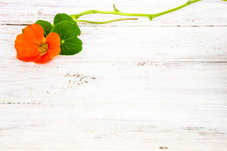 Background with flower of nasturtium isolated on white wood background useful as greeting card, wedding invitation, mothers day or invitations card.