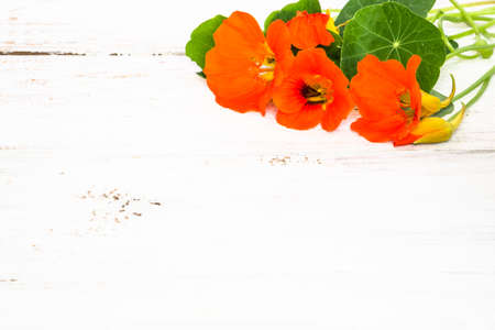 Wallpaper with flowers of nasturtium isolated on white wood background useful as greeting card, mothers day or invitations card.