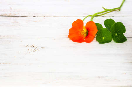 Flowers backgrounds with flower of nasturtium isolated on white wood background useful as greeting card, wedding invitation, mothers day or invitations card.