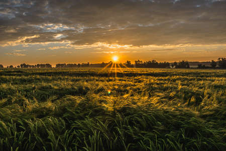 Wheat field, panorma. Landscape of agricultural crop and sunset sky. Reklamní fotografie