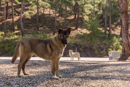 Stray dog left in the woods in TURKEY Foto de archivo