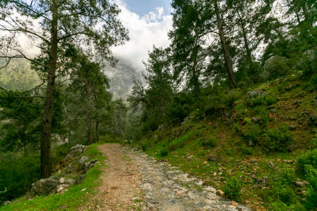 Young man walking on Forest Road in Turkey 免版税图像