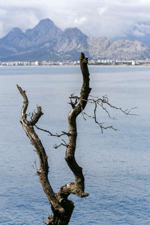 Mountain and sea views behind a dried-up tree in Antalya