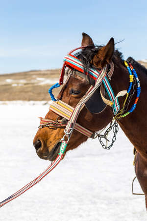 A Kars horse used in tourist trips and with various local ornaments on its head in Turkey