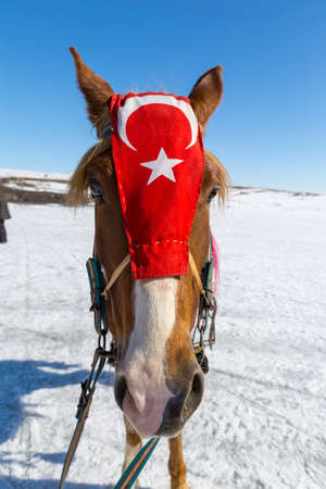 A Kars horse with a Turkish flag hanging on its forehead is used on tourist trips.