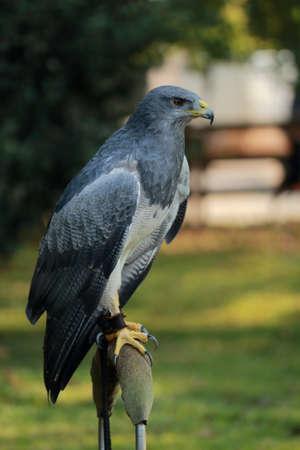 Eagle in the Cab?rceno Park Archivio Fotografico