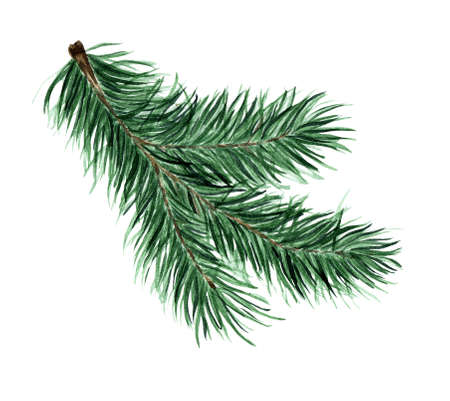 Green fluffy branch of spruce, pine, fir. Pine, fir branch for Christmas, New Year illustration. Watercolor isolated on white background. Drawn by hand.