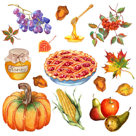 Thanksgiving set. Pumpkin, cherry pie, apples and pears, corn, grapes, honey, rowan, acorns and leaves. Watercolor illustration isolated on white background. Hand-drawn.