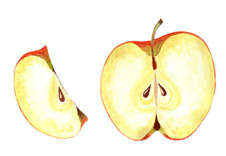 Sectional apple. Ripe, juicy apple, cut into pieces. Watercolor illustration. Isolated on a white background.