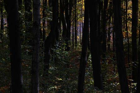 dark: Dark woods. Stock Photo