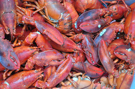 lobsters: Cooked Lobsters