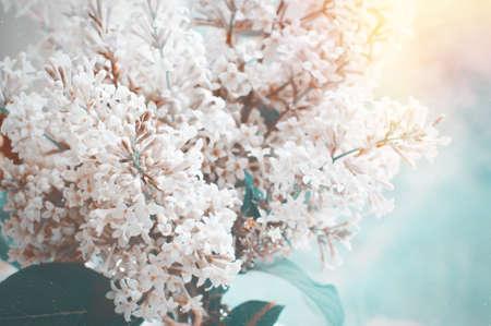 Ramo de verano de suave lila floreciente y rayo de sol Foto de archivo - 45355878