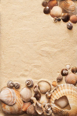 sand and sea shells on a beach in a summer sunset