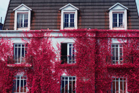 guesthouse: beautiful guesthouse exterior with fall pink leaves wall