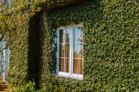 stoop: traditional irish house with green leaves covered wall