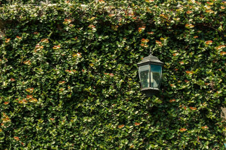 guesthouse: Lantern on a green wall in the garden of the guesthouse