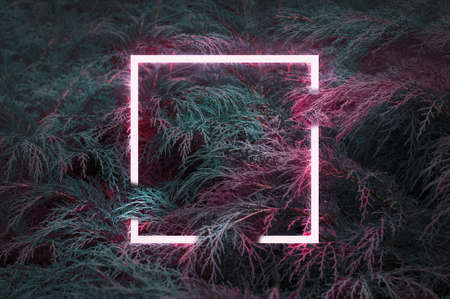 Creative fluorescent color layout made of natural green leaves with pink neon light square.